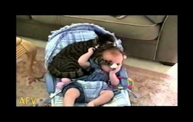 Απίθανο: Δείτε τι κάνει μία γάτα με ένα μωρό κάθε απόγευμα (βίντεο)