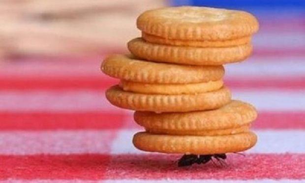 Μυρμήγκια στο σπίτι; Έτσι θα τα εξαφανίσετε!
