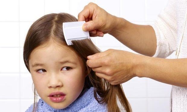 Ο «πονοκέφαλος» της ψείρας επέστρεψε μαζί με τα σχολεία - Τι να κάνετε