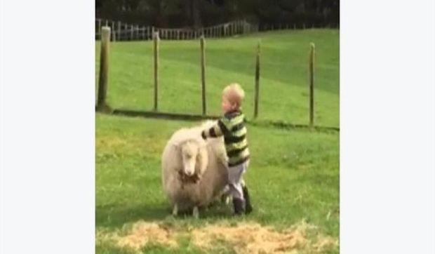 Το πιο δημοφιλές βίντεο: Αγοράκι προσπαθεί να κάνει ιππασία πάνω σε…πρόβατο! (βίντεο)
