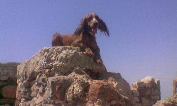«Μιλού», η βιογραφία μιας αδέσποτης σκυλίτσας