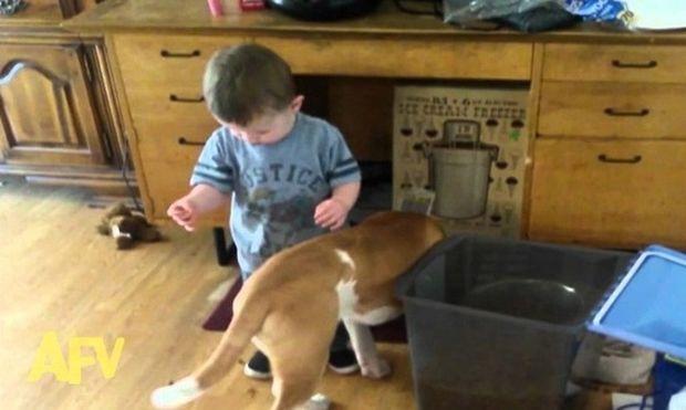 Δείτε τι συμβαίνει στο μικρό αγόρι ενώ προσπαθεί να ταΐσει τον σκύλο του (βίντεο)