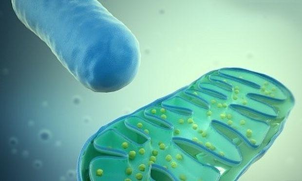 Δωρεά μιτοχονδριακού DNA: Μάθετε τα πάντα για τη νέα εμβρυολογική τεχνική στην εξωσωματική γονιμοποίηση