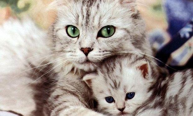 Η ιδανική διατροφή για τα γατάκια και τις ηλικιωμένες γάτες!