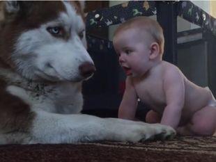 Το μωράκι προσπαθεί να χαϊδέψει αυτόν το σκύλο! Δε φαντάζεστε την αντίδρασή του! (video)