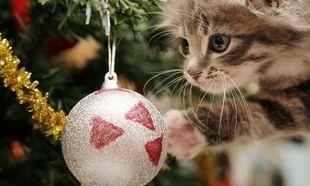 Ο πρώτος και πιο διαδεδομένος κίνδυνος είναι τα χριστουγεννιάτικα στολίδια