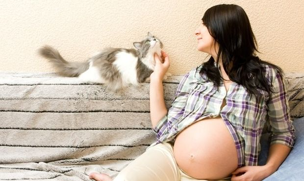 Τοξόπλασμα και εγκυμοσύνη-Όλα όσα πρέπει να γνωρίζετε από τον γυναικολόγο του Mothersblog