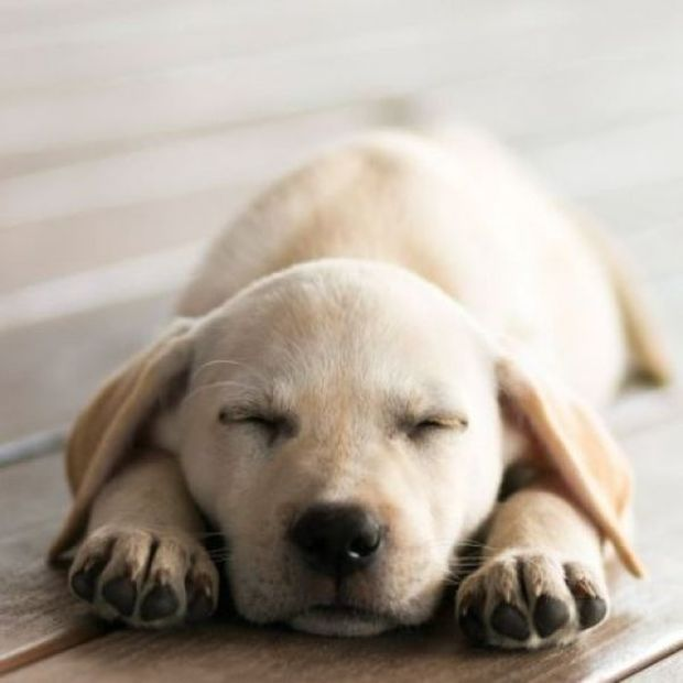 Παγκόσμια Ημέρα Αδέσποτων Ζώων: Πώς το σκυλάκι μου μου άλλαξε τη ζωή