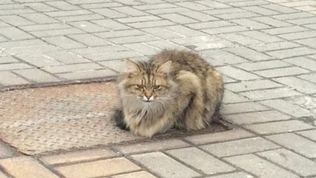 Γάτα παραμένει εδώ και έναν χρόνο στο σημείο που την εγκατέλειψαν