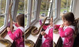Απίστευτο! Κοριτσάκι 3 ετών παίζει με έναν πύθωνα 2,5 μέτρων! (vid)