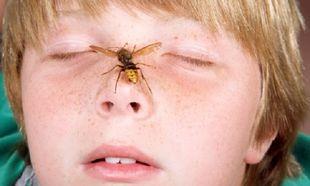 Αν ένα παιδί είναι αλλεργικό στη μέλισσα είναι και στη σφήκα;