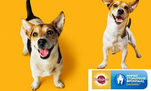 Μήνας Στοματικής Φροντίδας Pedigree® DentaStix®- Και φέτος ο Ιούνιος είναι αφιερωμένος  στη Στοματική Υγεία των Σκύλων!