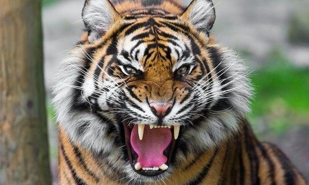 Τεστ: Με ποιο ζώο μοιάζεις όταν θυμώνεις