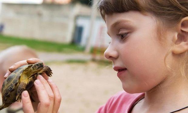 Χελωνάκια και σαλμονέλα: Πώς μπορούν να βλάψουν την υγεία των παιδιών