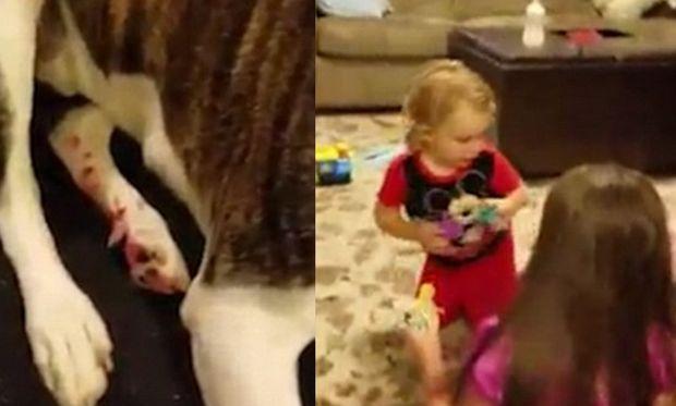 Άφησε τα παιδιά μόνα τους στο δωμάτιο για 7 λεπτά-Δείτε τι έγινε (βίντεο)