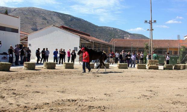 Την Πέμπτη η μεγάλη δημοπρασία 23 καθαρόαιμων ίππων από την Ιπποδρομίες ΑΕ, του ΟΠΑΠ