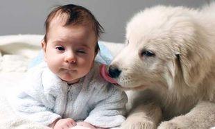«Υιοθετήσαμε κατοικίδιο αλλά το παιδί μας είναι αλλεργικό…Τι κάνουμε;»