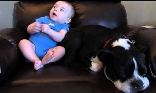 Είναι μαζί με το μωρό στην πολυθρόνα όμως ξαφνικά ο σκύλος φεύγει. Δείτε τον ξεκαρδιστικό λόγο (vid)
