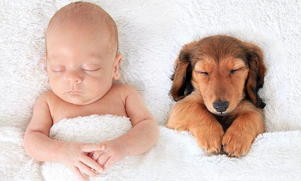 Φωτογραφίες που αποδεικνύουν ότι ο σκύλος είναι η καλύτερη συντροφιά στο κρεβάτι