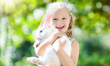Επιλέγοντας ανάμεσα στα καλύτερα κατοικίδια για παιδιά όταν δεν θέλουν σκύλο και γάτα