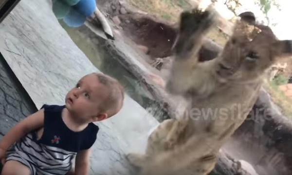 Έχετε δει πιο άνετο μωρό σε ζωολογικό κήπο;