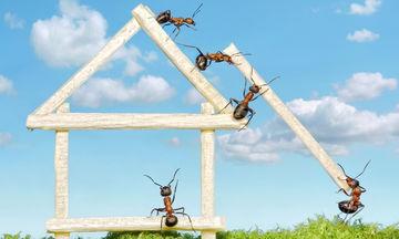Διώξε τα μυρμήγκια από το σπίτι με φυσικούς τρόπους