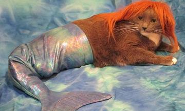 Αυτές είναι οι πιο ασυνήθιστες και αστείες φωτογραφίες με ζώα που έχετε δει