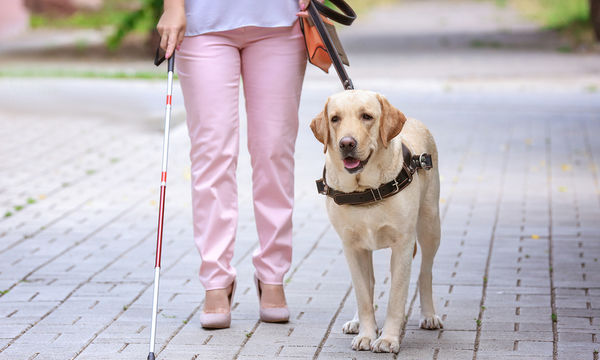 Σκύλοι-οδηγοί τυφλών: Όλα όσα πρέπει να γνωρίζετε