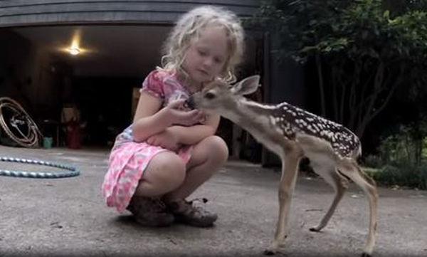 Νεογέννητο ελαφάκι βρίσκει ξανά τη μαμά του με τη βοήθεια ενός μικρού κοριτσιού! (video)