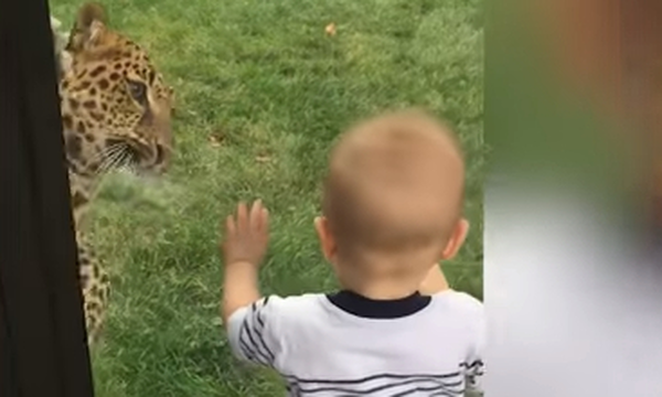 Η επίσκεψη των παιδιών στο ζωολογικό κήπο, έχει και τα απρόοπτα της (vds)