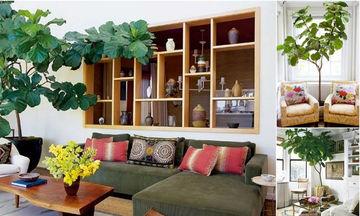 Φυτά εσωτερικού χώρου: 35 ιδέες για να διακοσμήσετε το καθιστικό σας (pics)