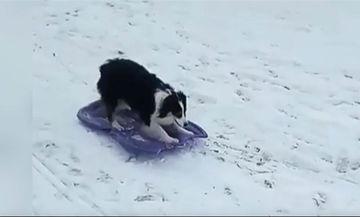 Σκυλίτσα κάνει snowboard και τρελαίνει το διαδίκτυο (video)