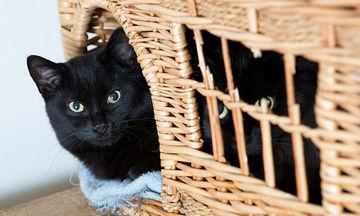 Ο απίστευτος λόγος που πολλοί άνθρωποι εγκαταλείπουν τις μαύρες γάτες