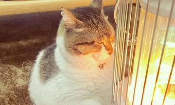 Οι πιο αστείες φωτογραφίες: Γάτος «ερωτεύτηκε» μία σόμπα! (pics)