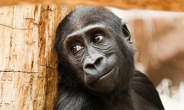 Ποιος είπε ότι τα ζώα δεν στήνονται για μία φωτογραφία; Δείτε τις απίστευτες πόζες τους στο φακό