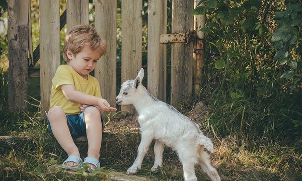 Κατσικίσιο γάλα και παιδί: Σύγχρονη τάση της μόδας ή αληθινή θρεπτική αξία;