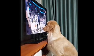 Πολύ γέλιο! Αυτός ο σκύλος είναι φανατικός οπαδός του NBA (pics)