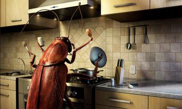 Πέντε μαγικοί τρόποι για να απαλλαγείτε μία και καλή από τις κατσαρίδες