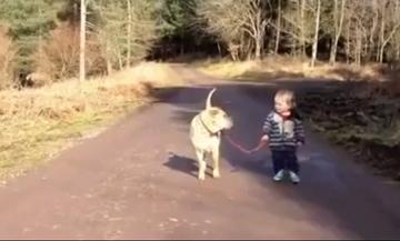 Ένα γλυκό βίντεο! Η βόλτα ενός μικρού παιδιού με το σκύλο (vid)