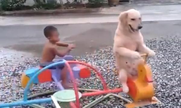 Δεν υπάρχει! Δείτε το σκύλο να κάνει καρουζέλ παρέα με ένα αγοράκι