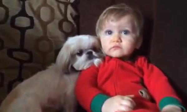 Η τέλεια εικόνα: Η τρυφερή σκηνή ενός μωρού με το σκυλάκι του (vid)