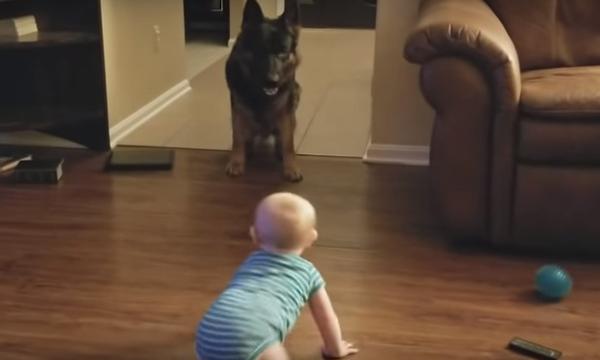 Μπέμπης ξεκαρδίζεται στα γέλια ενώ παίζει κυνηγητό με ένα σκύλο (vid)