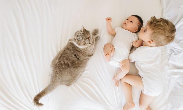Έξι τρόποι να προετοιμάσετε τη γάτα σας για τον ερχομό του μωρού σας