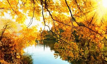 Αριθμολογία: Προβλέψεις για τα Αισθηματικά και Οικονομικά του Νοεμβρίου