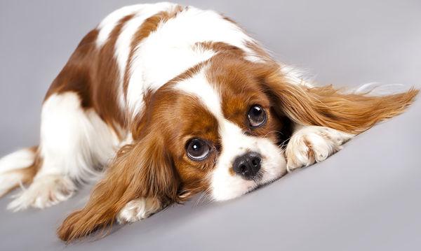 Επιλέξτε το σωστό κατοικίδιο ζώο για την οικογένειά σας (pics)