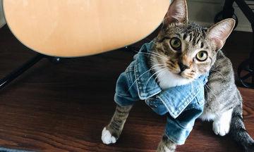 Φοιτήτρια φόρεσε τζιν μπουφάν στη γάτα της και οι φώτο κάνουν το γύρο του διαδικτύου (pics)