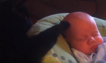 Γατούλα σε ρόλο babysitter! (vid)