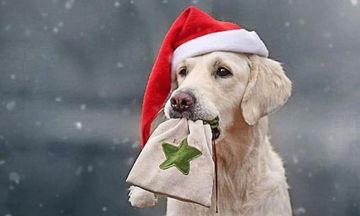 Χαριτωμένα σκυλάκια φόρεσαν τα γιορτινά τους (pics)