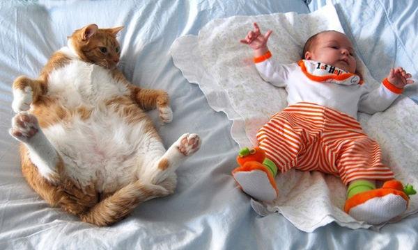 Υπέροχες φωτογραφίες που δείχνουν ότι οι γάτες είναι οι καλύτερες φίλες των παιδιών σας (pics)