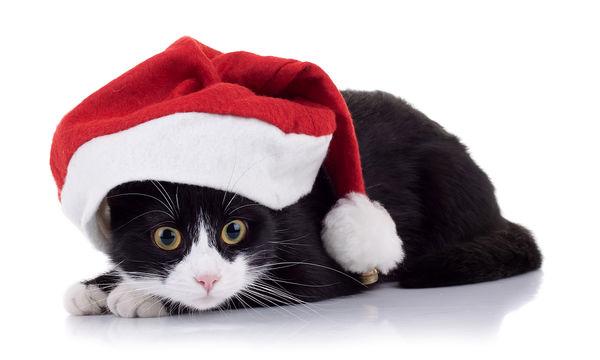 Γάτα προσπαθεί να ξεκολλήσει χριστουγεννιάτικο στολίδι από την ουρά της! (vid)